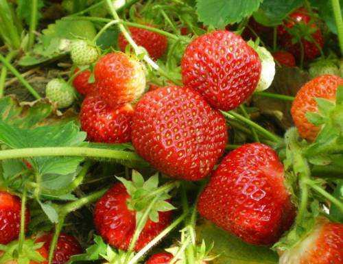 10 лучших корнеплодов, которые вы должны чаще употреблять